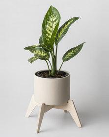 Native Decor Bloukrans Pot Plant Holder