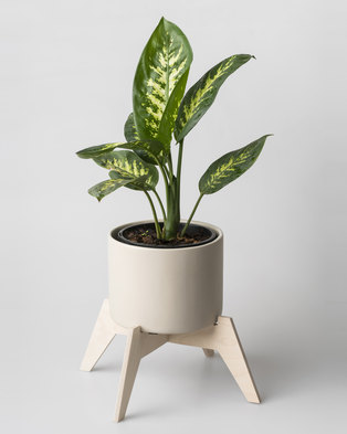 Native Decor Bloukrans Pot Plant Holder