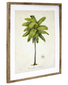 NovelOnline Coconut Palm Framed Print