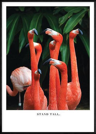 Boluo Keep Your Chin Up (Flamingos)  Wall art