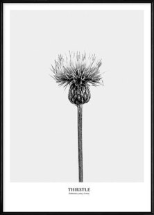 Boluo Humble resilience(thistle) Wall art