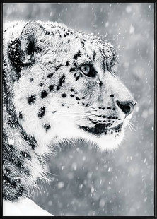 Boluo Preseverance(Snow leopard) Wall art