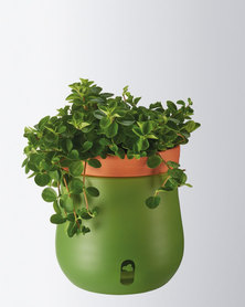 Leonardo Self-Watering Plant Pot Planter Green Serra Large